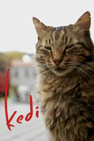 Ver Kedi (2017) (HD) (Subtitulado) [flash] online (descargar) gratis.