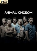 Ver Animal Kingdom - 2x06 (HDTV-720p) [torrent] online (descargar) gratis.