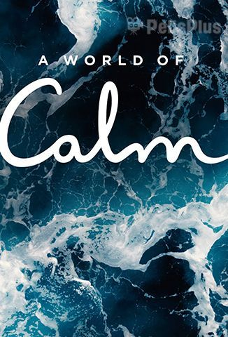 Ver A World Of Calm - 1x01 (2020) (720p) (subtitulado) [flash] online (descargar) gratis.